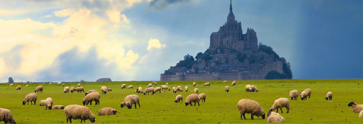 L'agneau du Mont Saint-Michel